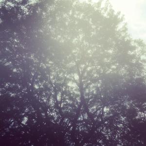 tree 7-13